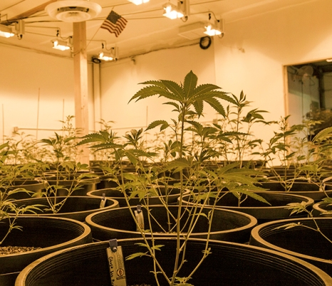 The new grow at Mary Jane's Telluride-based facility